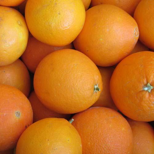 Mallorca Orangen Salz